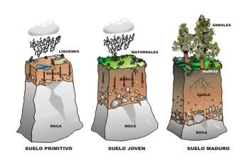 Tipos de vegetaci n y sus relaciones con el clima y los for Formacion de los suelos